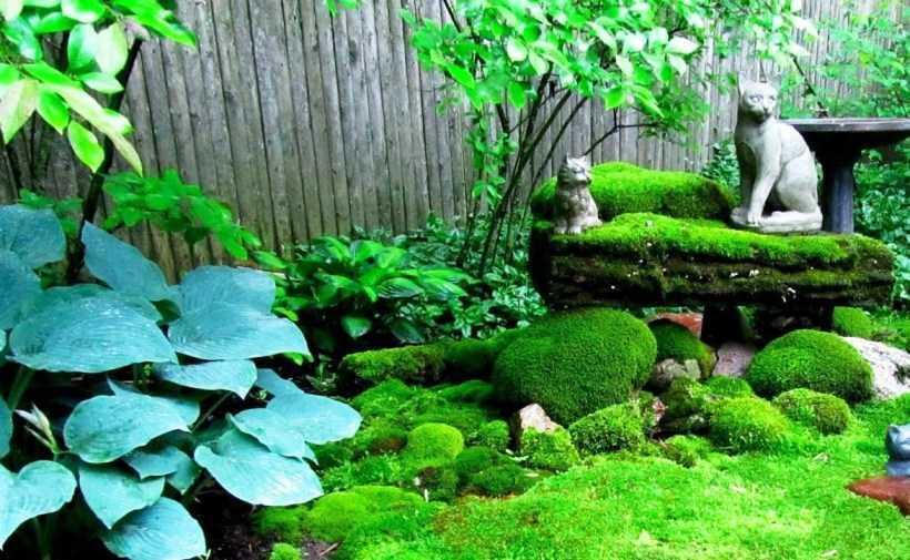 Декоративный мох в саду — особенности разновидностей, варианты использования мха. Правила ухода, инструкция по посадке своими руками (фото + видео)