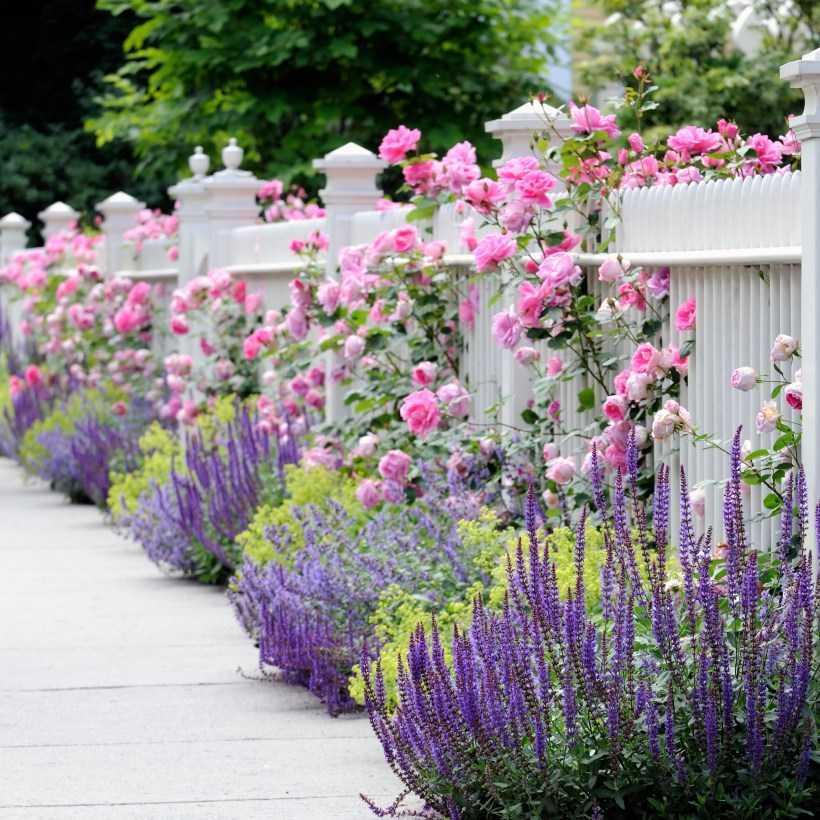 Лучшие цветы для дачи: ТОП-150 фото разновидностей сортов и видов. Правила выбора цветов, посадка и выращивание на даче