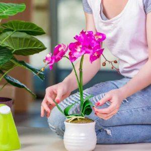 Уход за орхидеей в домашних условиях — разновидности орхидеи, особенности пересадки и ухода, рекомендации по содержанию в домашних условиях