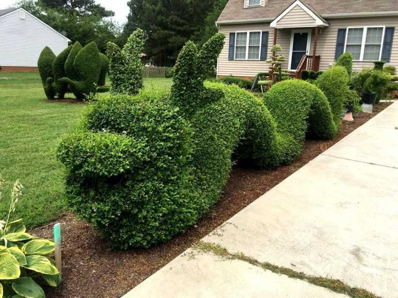 Как оформить топиарий в саду — 150 фото лучших идей дизайна своими руками, разновидности растений и форм. Простая инструкция от садоводов поэтапно