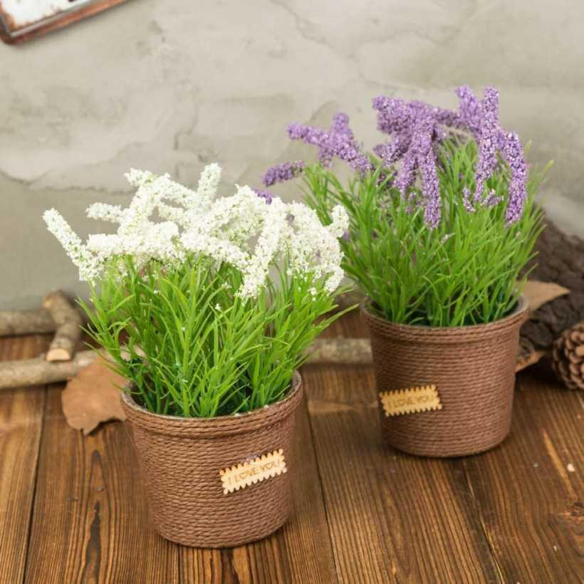 Цветок Лаванда — советы по выращиванию в открытом грунте. Способы посадки, размножения и ухода, подготовка к зиме