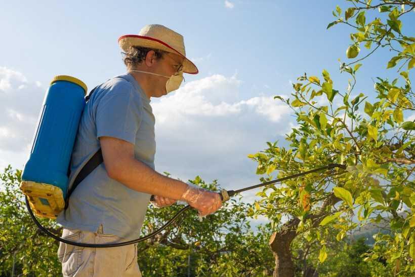Обработка плодовых деревьев ? — обзор лучших способов. Подготовка и процесс обработки, выбор времени и пестицидов