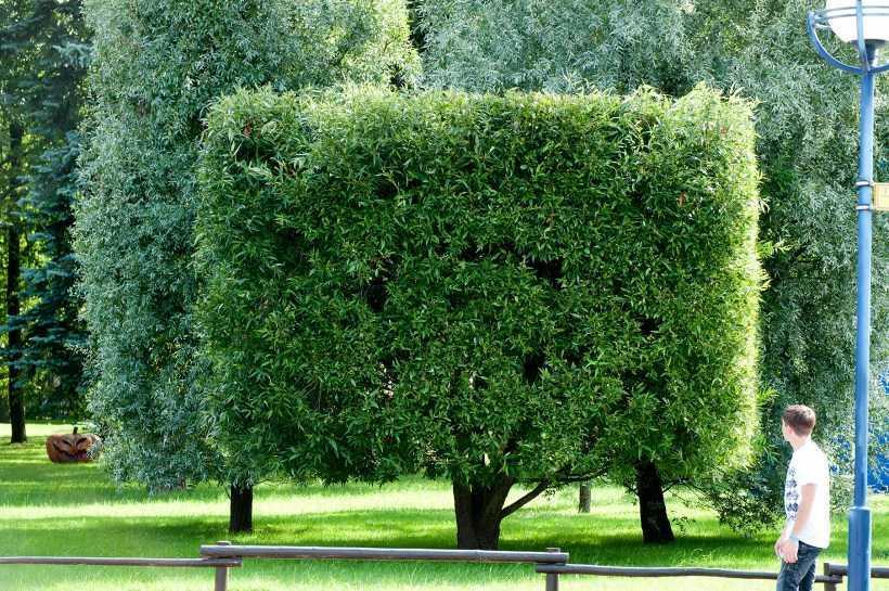 Красивая стрижка кустов — лучшие способы и техники стрижки. Выбор растений и формы обрезки + 150 фото-обзоров