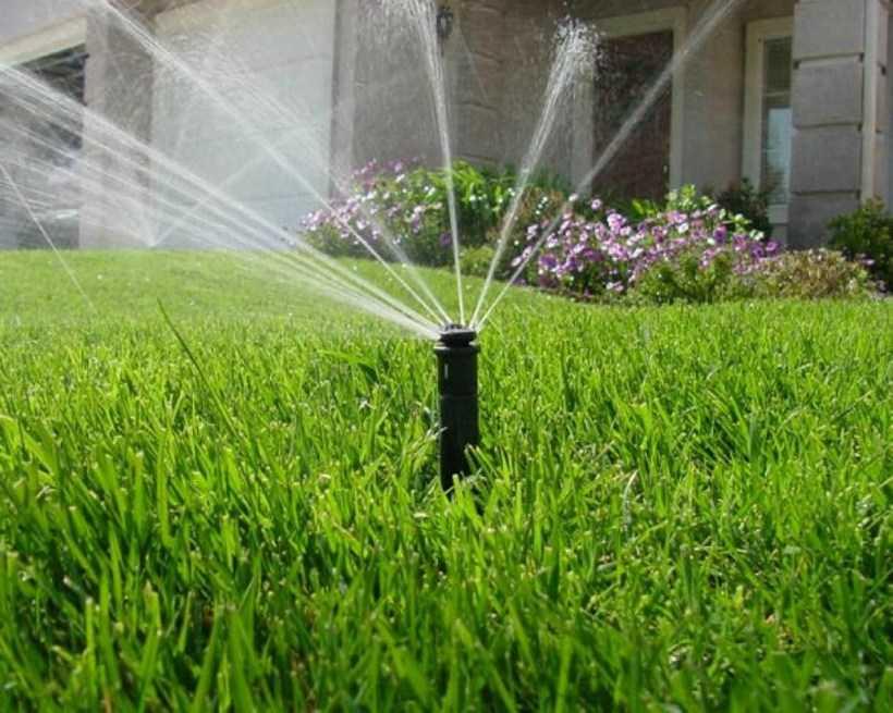Полив газона: разновидности травы, способы и частота полива, особенности устройств + пошаговая инструкция для начинающих